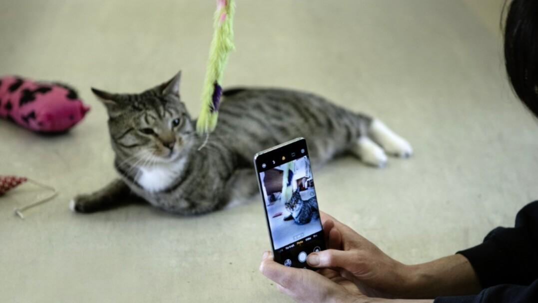 Nie chcemy adoptować zwierząt, które źle wyglądają na zdjęciach