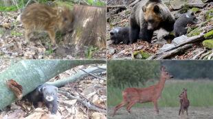 Najmłodsi i najmniejsi w polskich lasach. Zobaczcie dzieci ze świata zwierząt