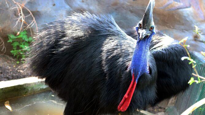 Mężczyzna zginął po ataku egzotycznego ptaka. Hodował go na podwórku