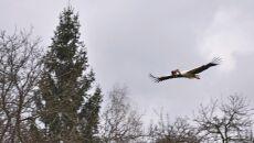 Bociany wracają do gniazd w Polsce