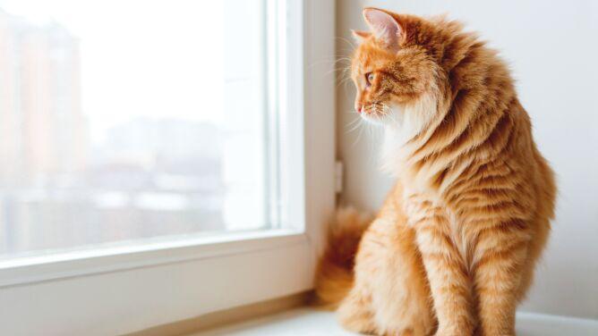 21 chorych na COVID-19 dało zbadać swoje psy <br />i koty. Sprawdzono, ile zwierząt się zakaziło